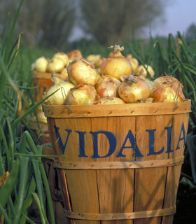 Vidalia Onion Transplants