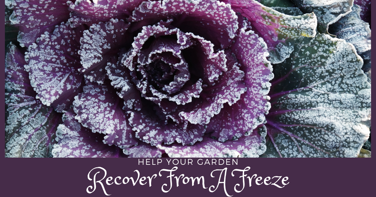Helping Your Garden Recover From a Freeze
