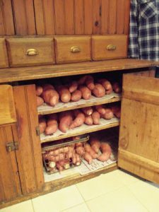 sweet potato potatoes organic garden storage