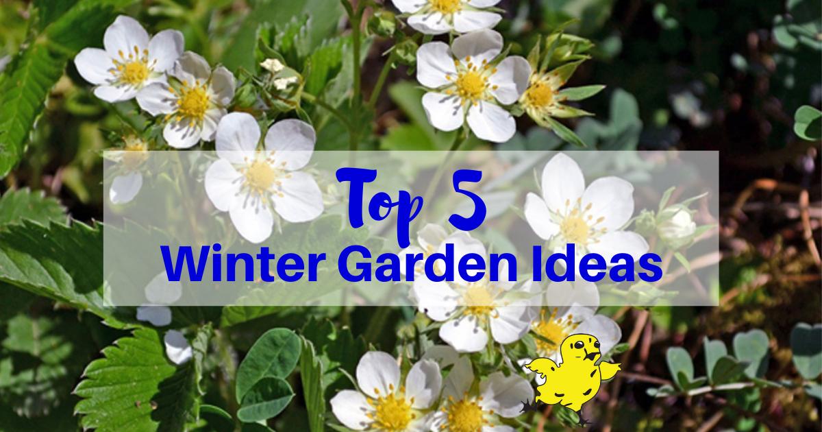 Our Top 5 Winter Gardening Ideas