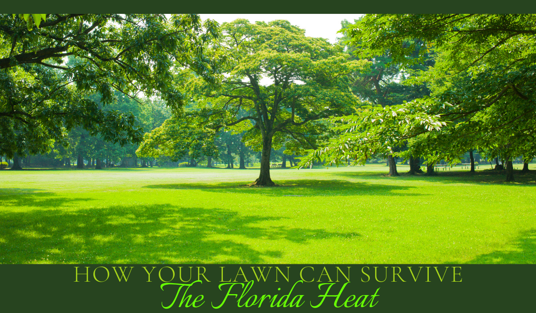 How Your Lawn Can Survive Florida Heat