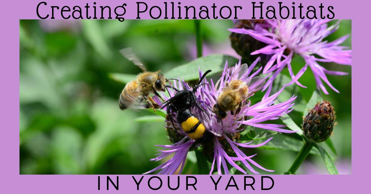 Creating Pollinator Habitats In Your Yard