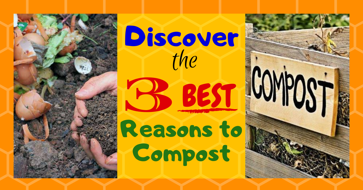 Discover the 3 Best Reasons to Compost