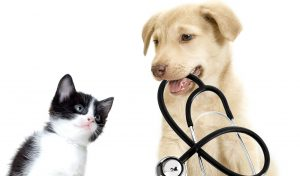 Veterinarian – Healthy Pets Florida @ Back Lot of Shell's Feed & Garden Supply, Inc.