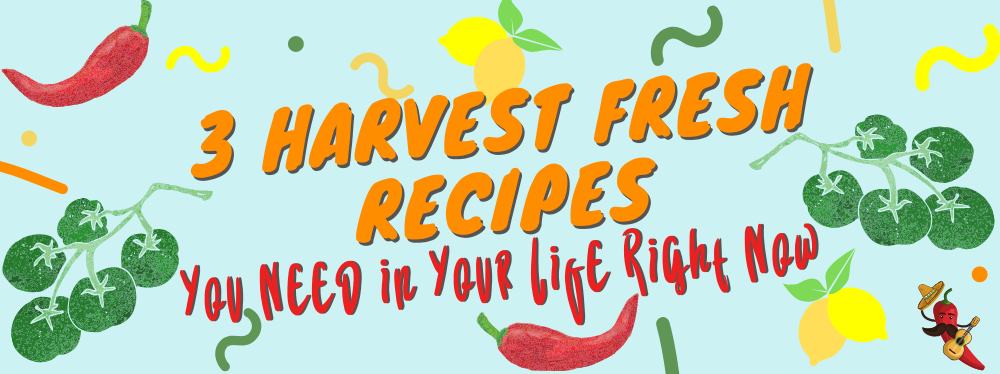 3 Harvest Fresh Recipes You Need in Your Life Right Now