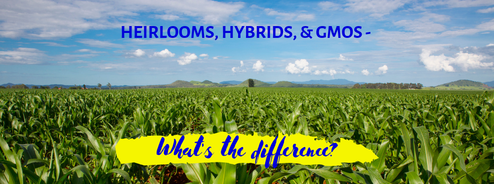 Heirlooms, Hybrids, & GMOs – What's the difference?