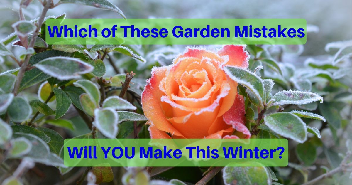 Which of these Gardening Mistakes Will You Make This Winter?