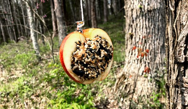 wild birds apple bird feeder