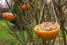 wild birds orange bird feeder