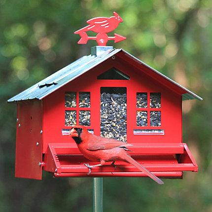 wild birds bird feeder