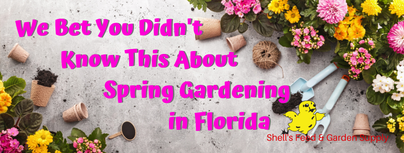 We Bet You Didn T Know This About Spring Gardening In Florida