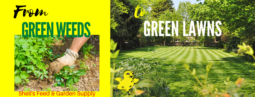 From Green Weeds to Green Lawns Blog Featured Image