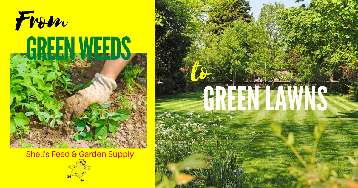 From Green Weeds to Green Lawns