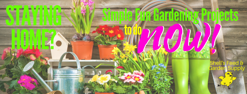 Staying Home? Simple Fun Gardening Projects To Do Now