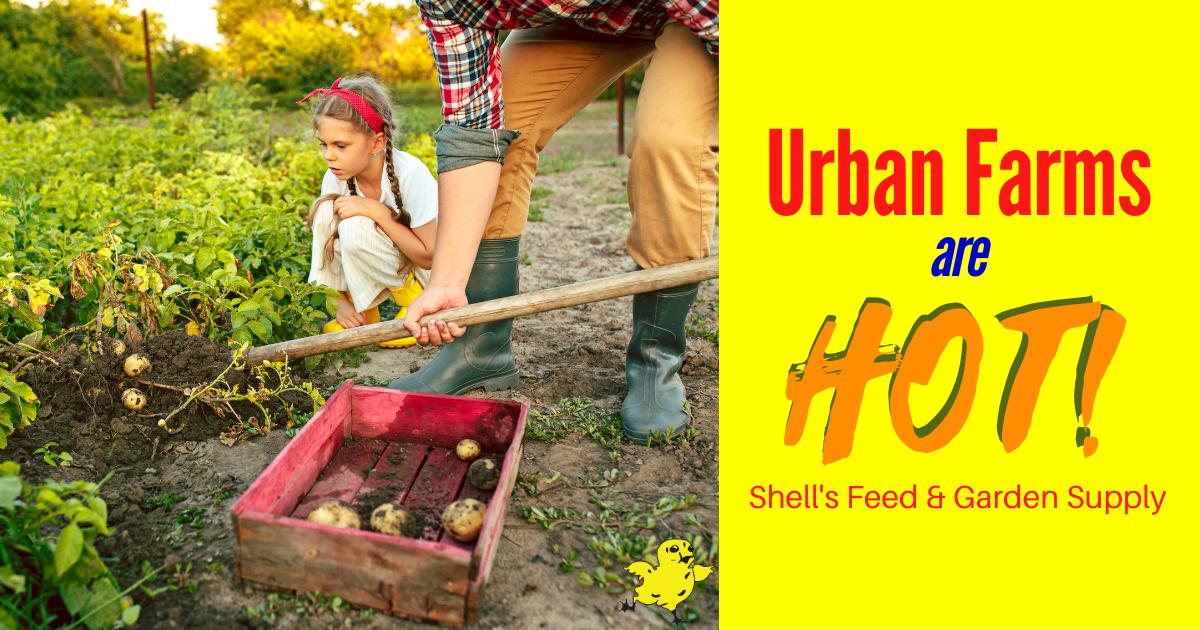 Urban Farms are HOT!
