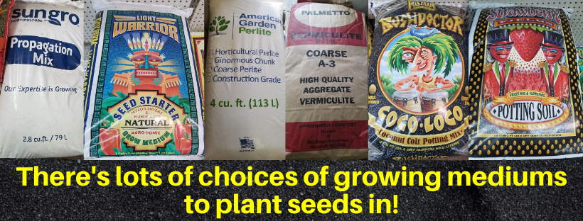 growing mediums in gardening for seed planting