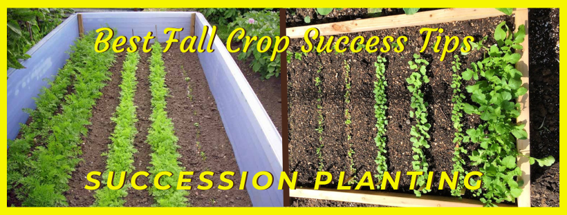 fall crop Succession planting starters