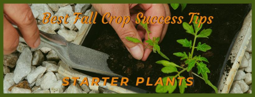 fall success garden tips