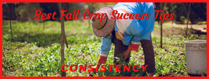 start with consistency fall crop