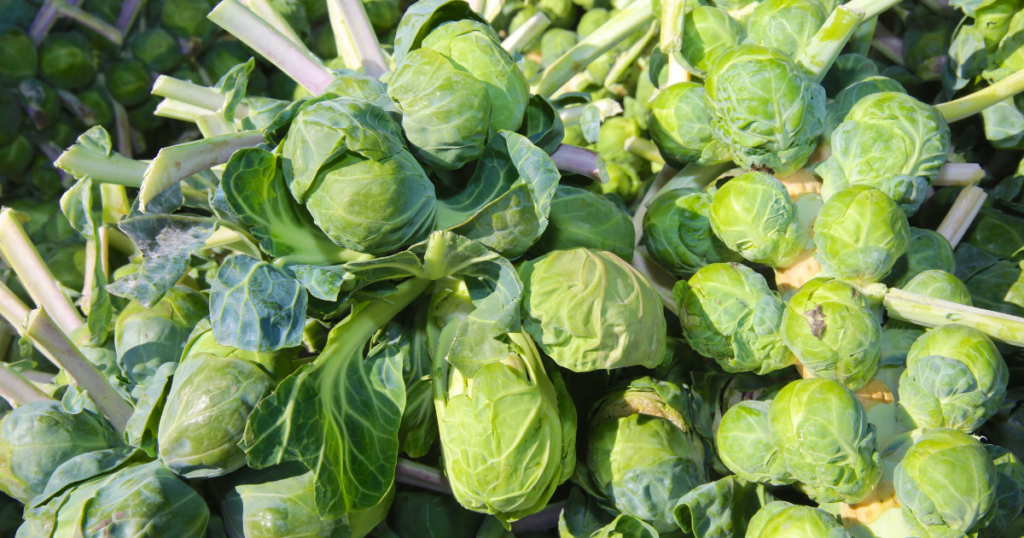 winter crop brussels sprouts