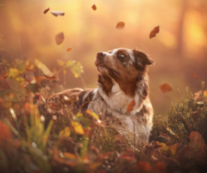 Falling leaves and a dog