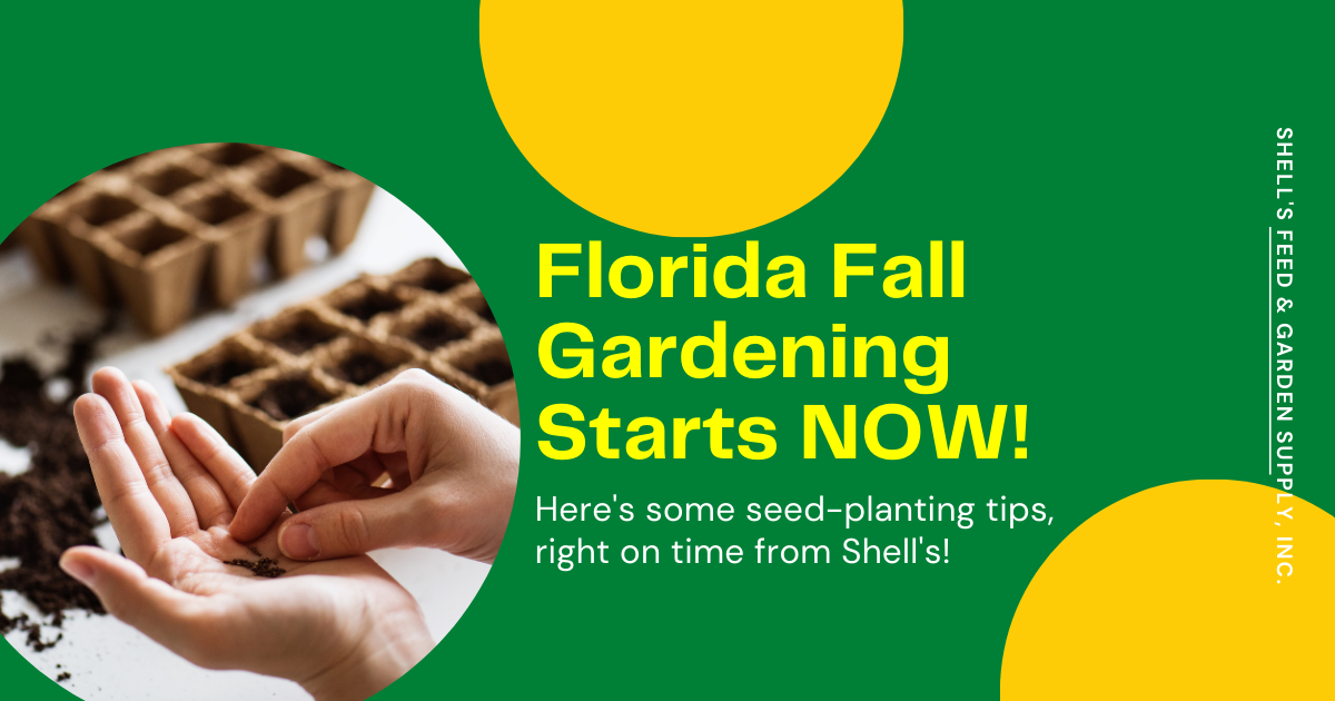 Florida Fall Gardening Starts NOW!