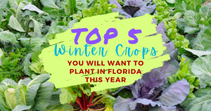 Top 5 Winter Crops You Will Want To Plant In Florida This Year