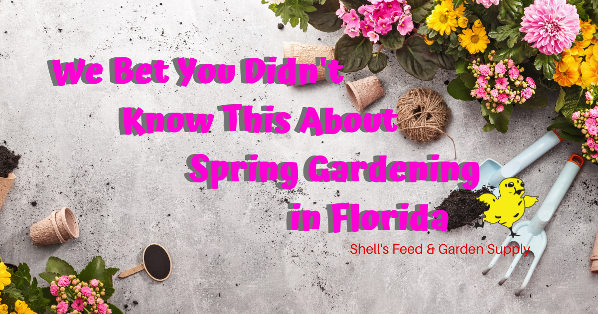 We Bet You Didn't Know This About Spring Gardening In Florida