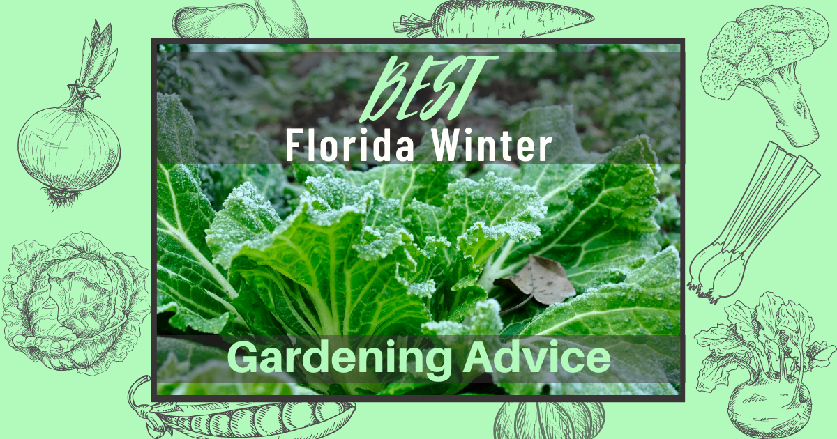 Best Florida Winter Gardening Advice