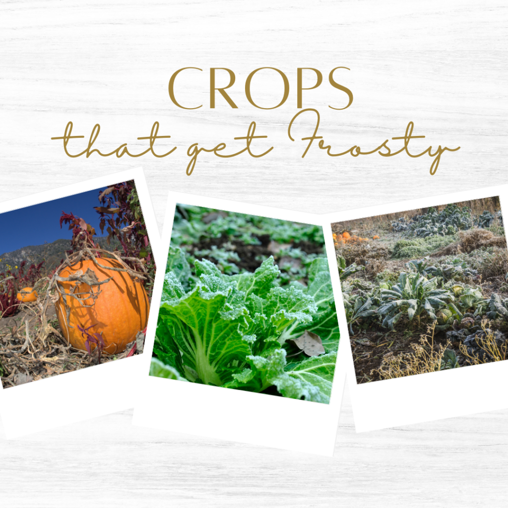 Here's a few examples of crops that can get a little frosty.