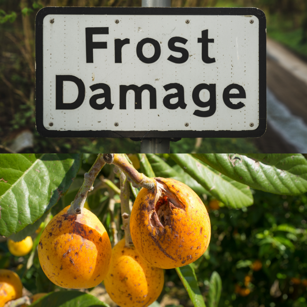Frost damage comes in many forms, from leaves to fruit to stems and roots.