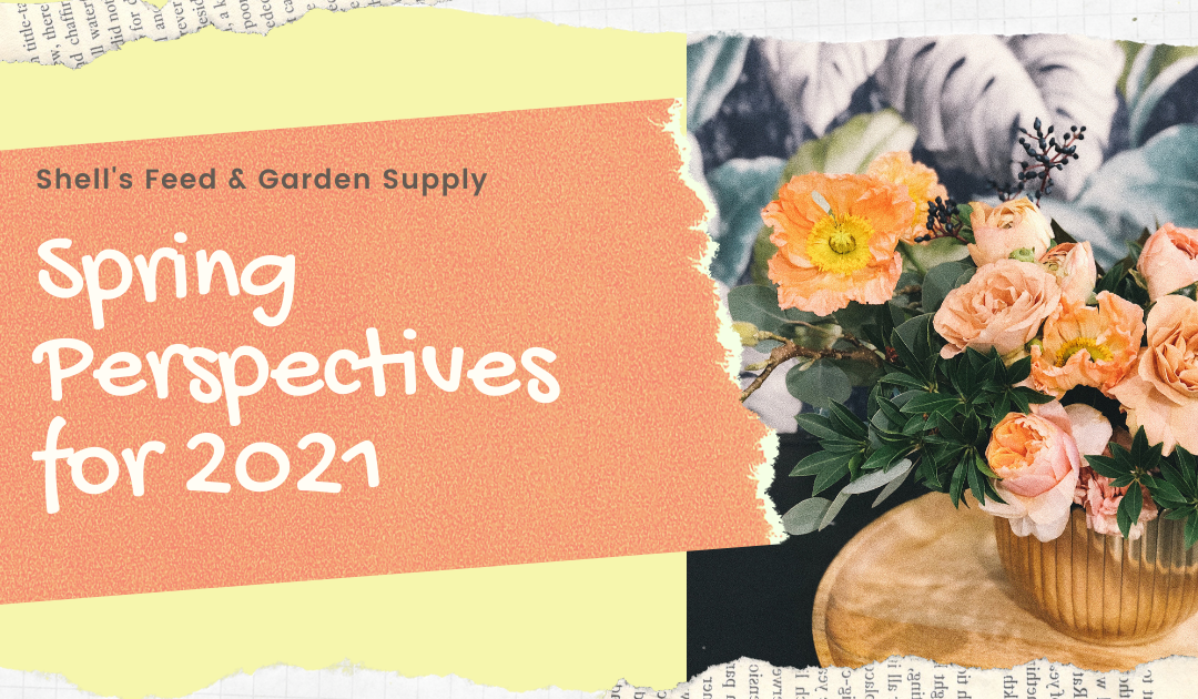 Spring Perspectives for 2021
