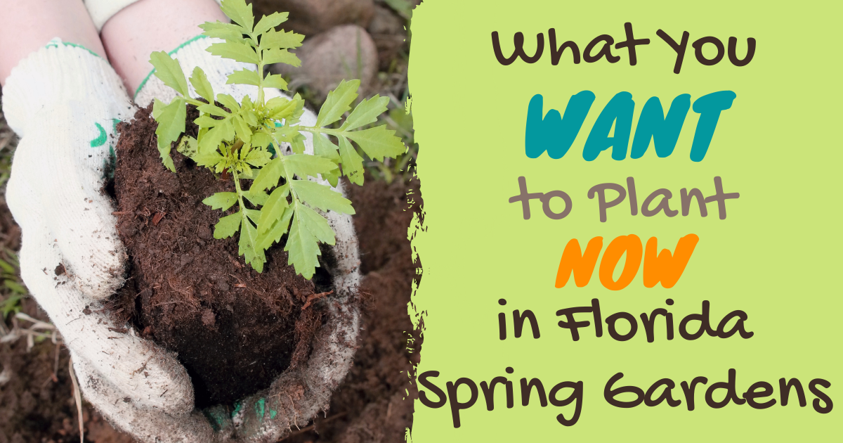 What You Want To Plant Now In Florida Spring Gardens