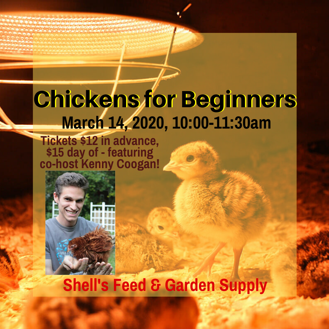 Chickens for Beginners Class