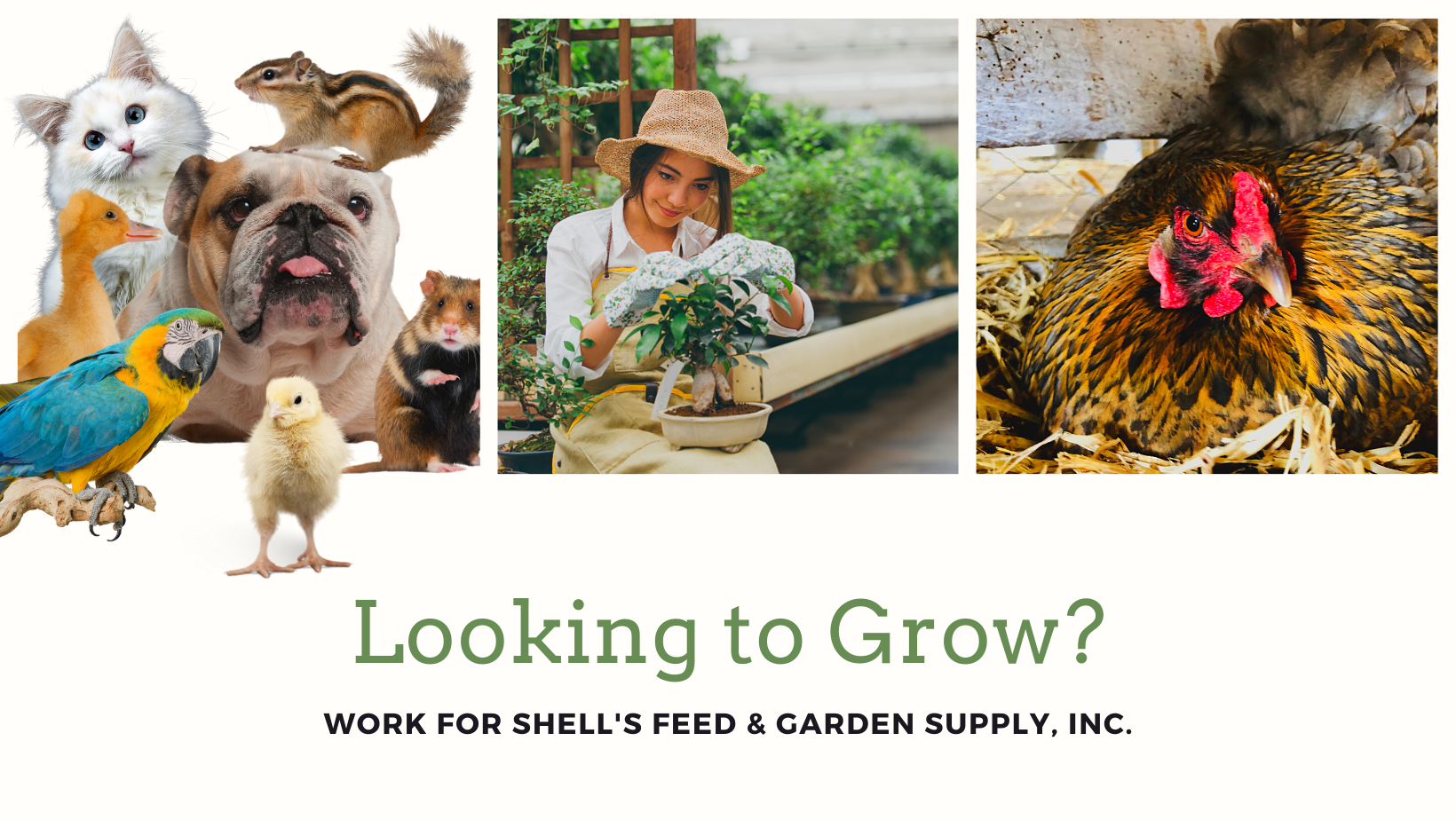 Looking To Grow? Work for Shell's Feed & Garden Supply Inc