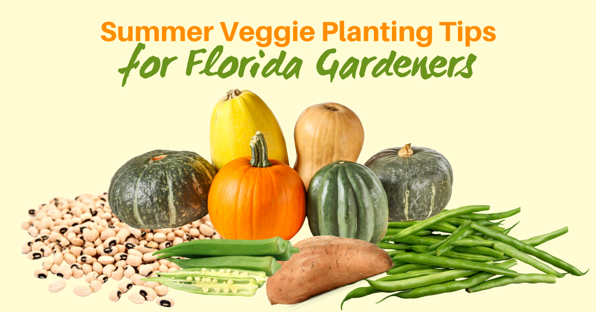 Summer Veggie Planting Tips for Florida Gardeners