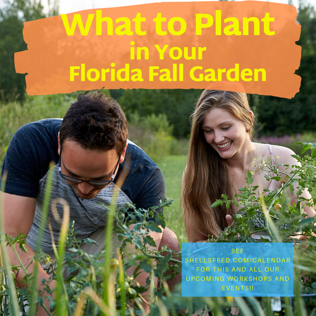 What to Plant in Your Florida Fall Garden