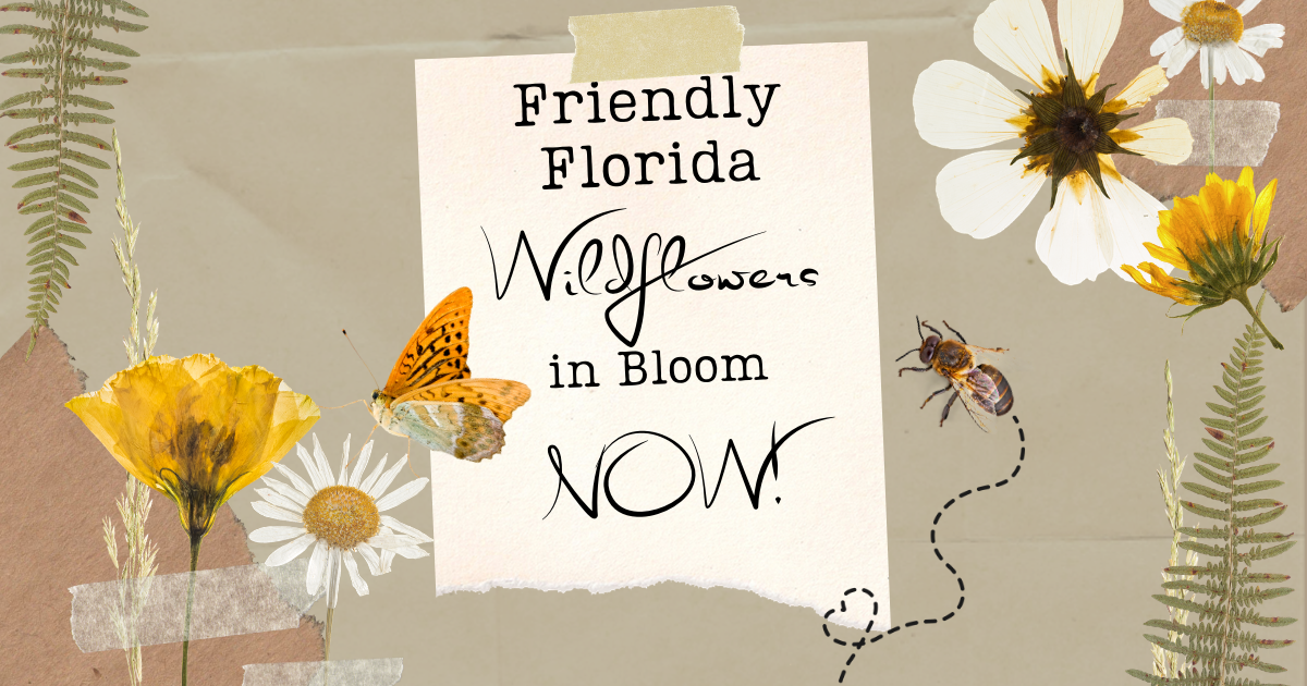 Friendly Florida Wildflowers in Bloom NOW!