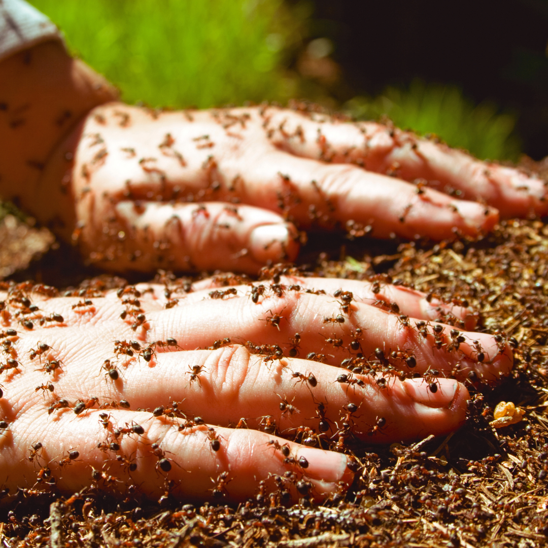 Ants on your hands