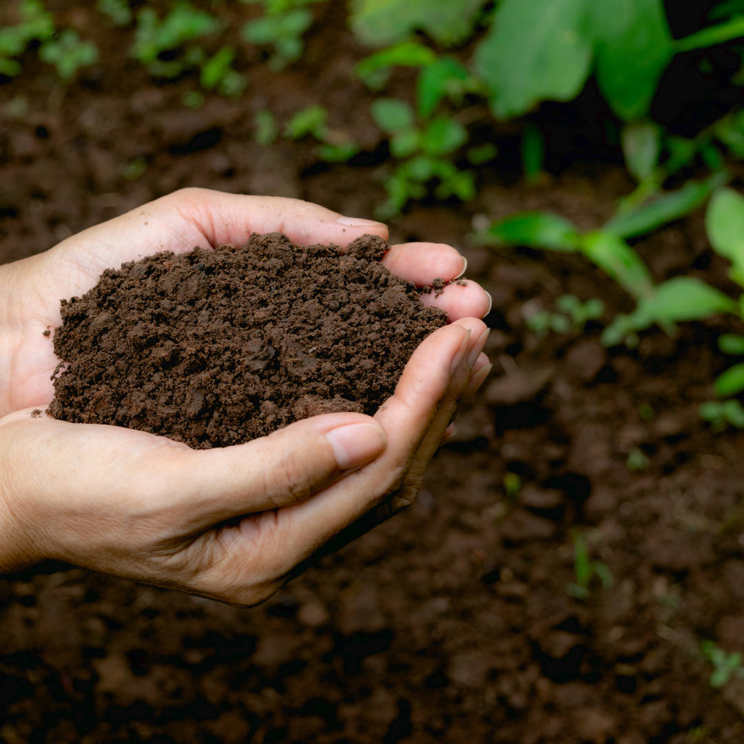 Composted chicken manure is great for the garden