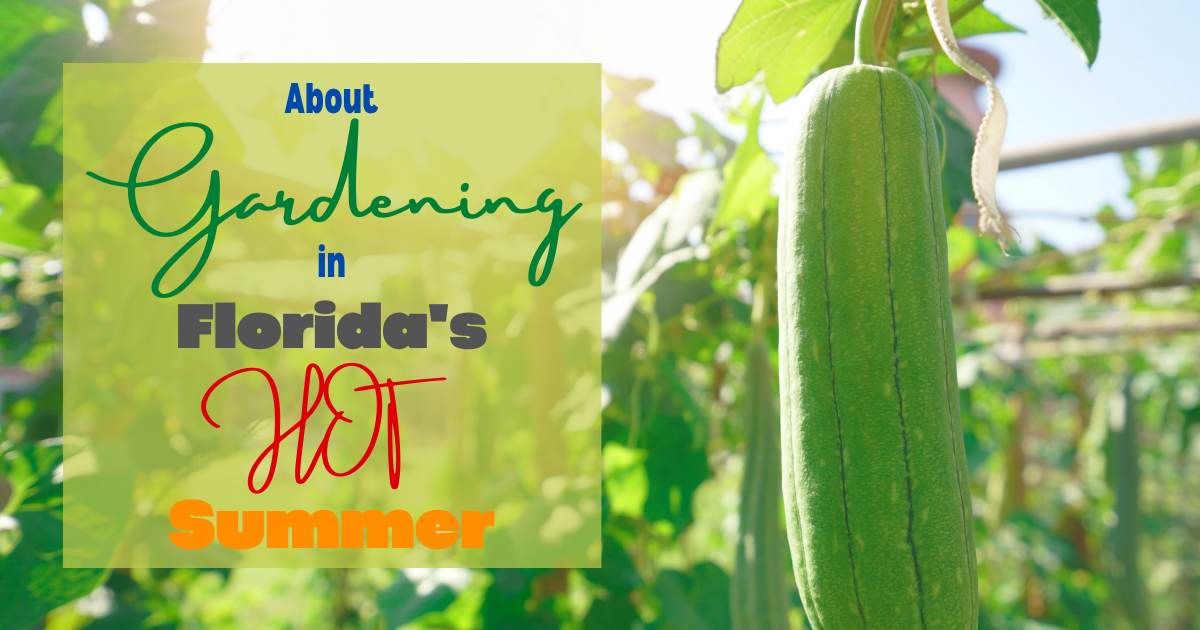 About Gardening in Florida's Hot Summer