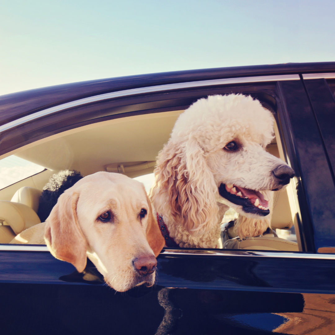 Don't Leave Your Dogs In A Hot Car