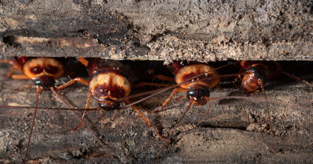 Pest Control Tampa Florida