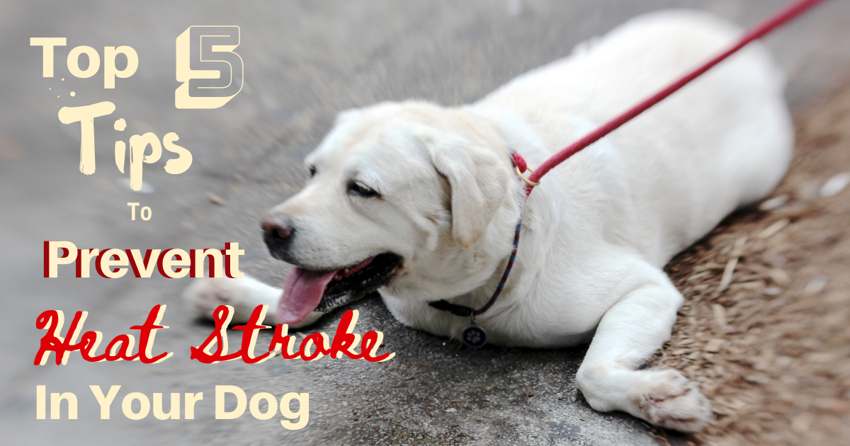 Top 5 Tips to Prevent Heat Stroke in Your Dog