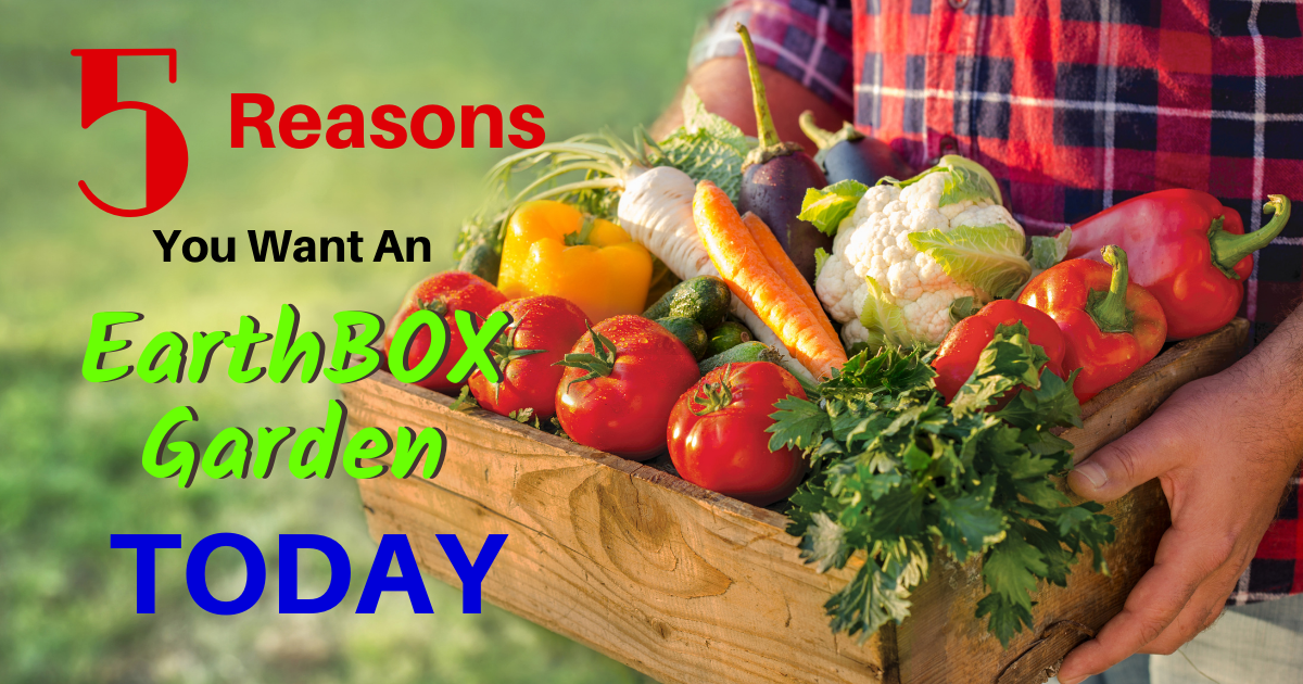 5 Reasons You Want An EarthBOX Garden Today