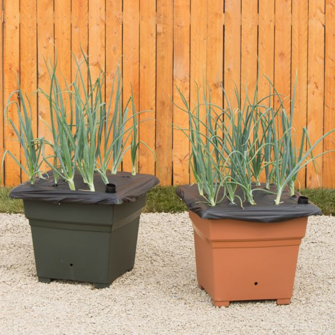 EarthBOX Root & Veg - Convenience and Grow Your Own