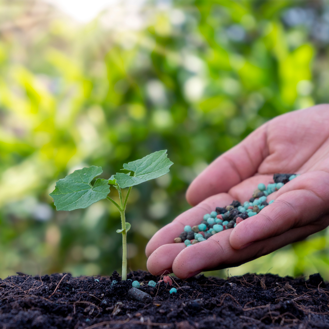 Fertilize ONCE per season and produce more than you ever have, from one box!