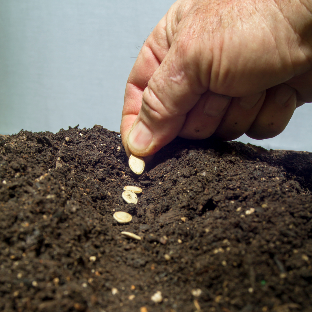 Plant Seeds Now