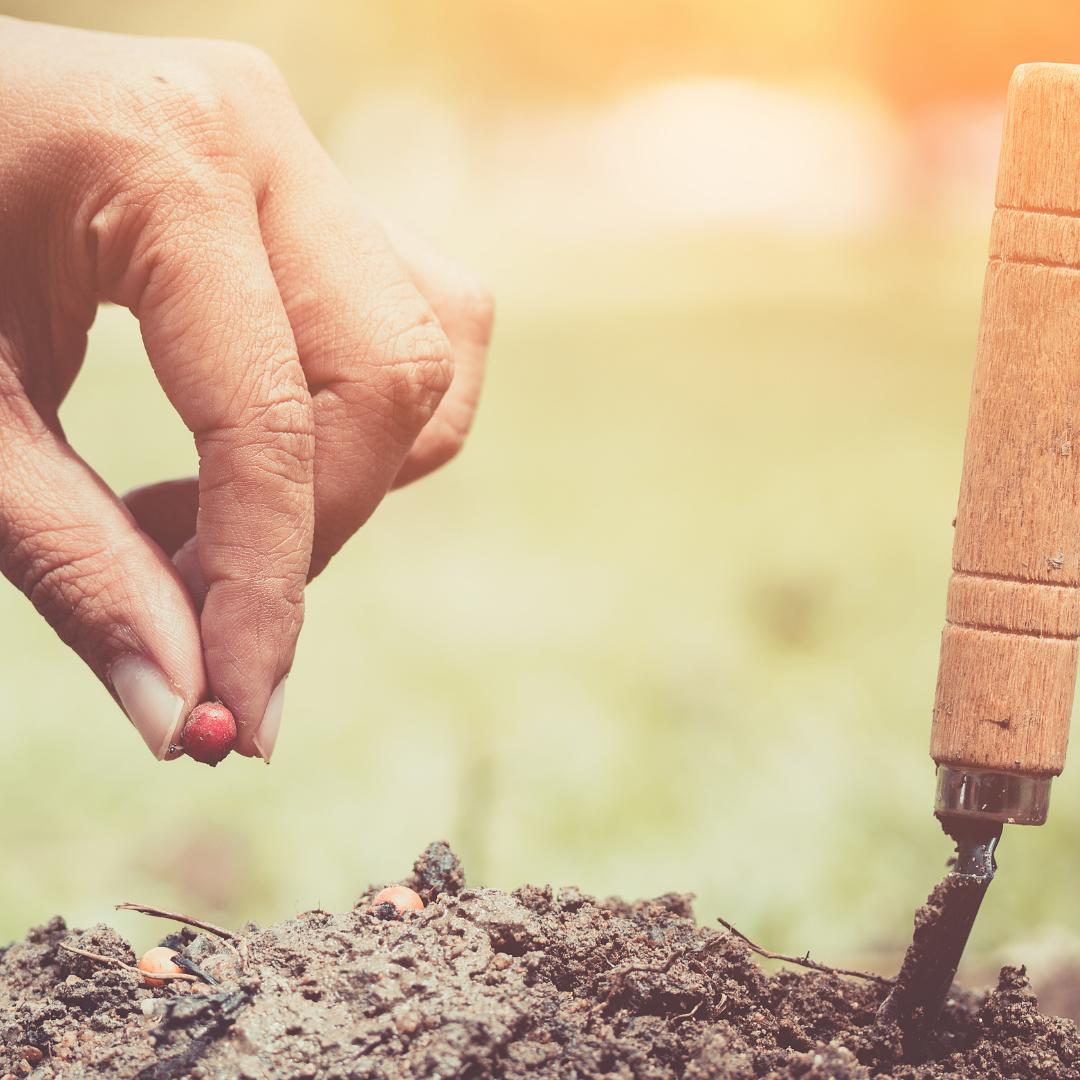 Seed Planting