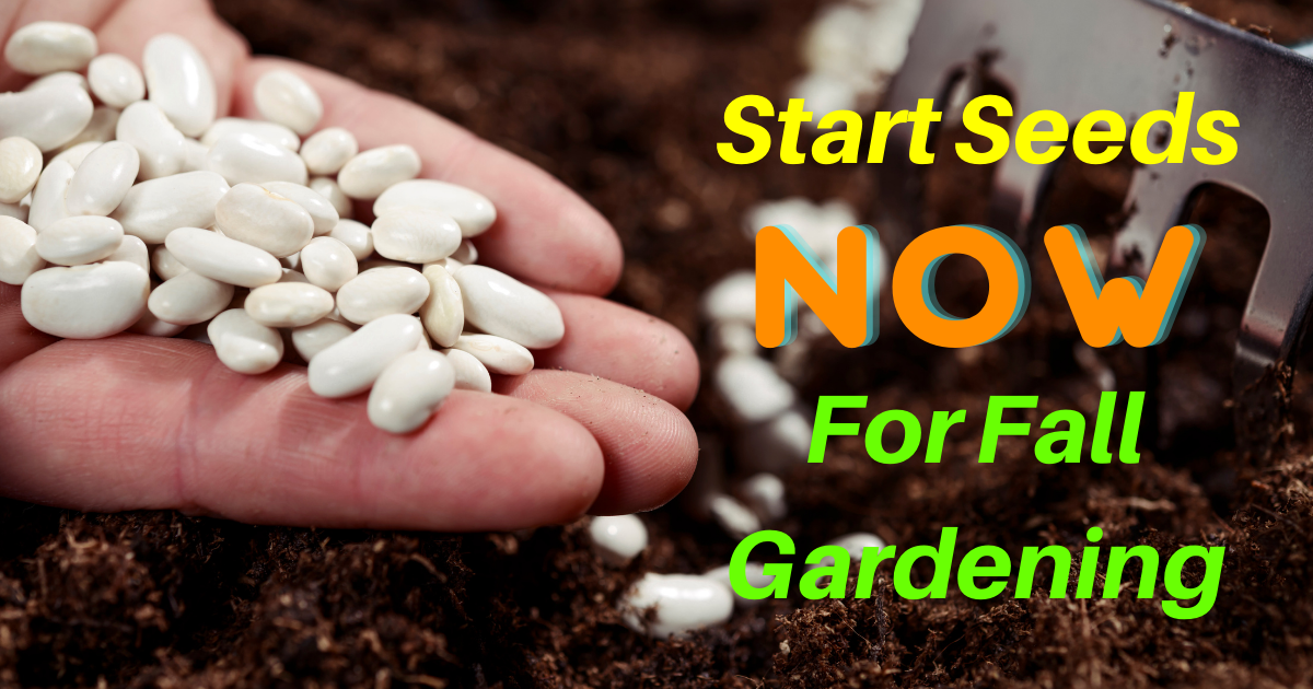 Start Seeds NOW for Fall Gardening